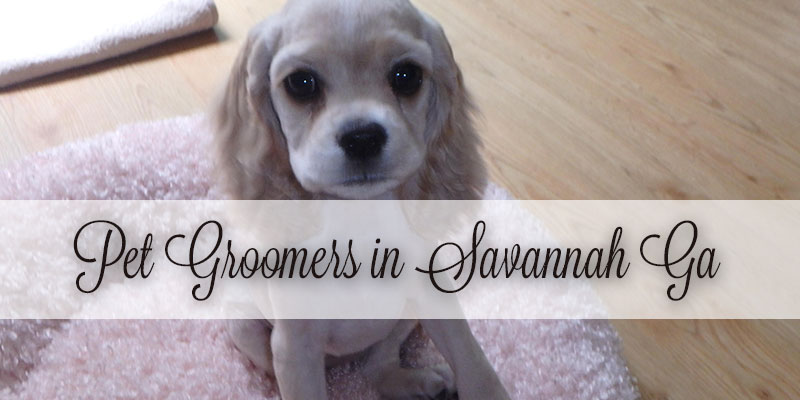 How to find new pet groomers in Savannah